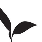 vine_ripe_logo-02_150w