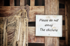Please Do Not Annoy the Chickens